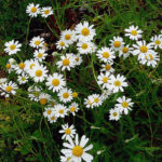 Plantas medicinales: la alternativa más saludable