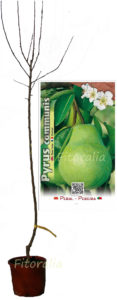 Frutas que favorecen la pérdida de peso - Huerto.Bio